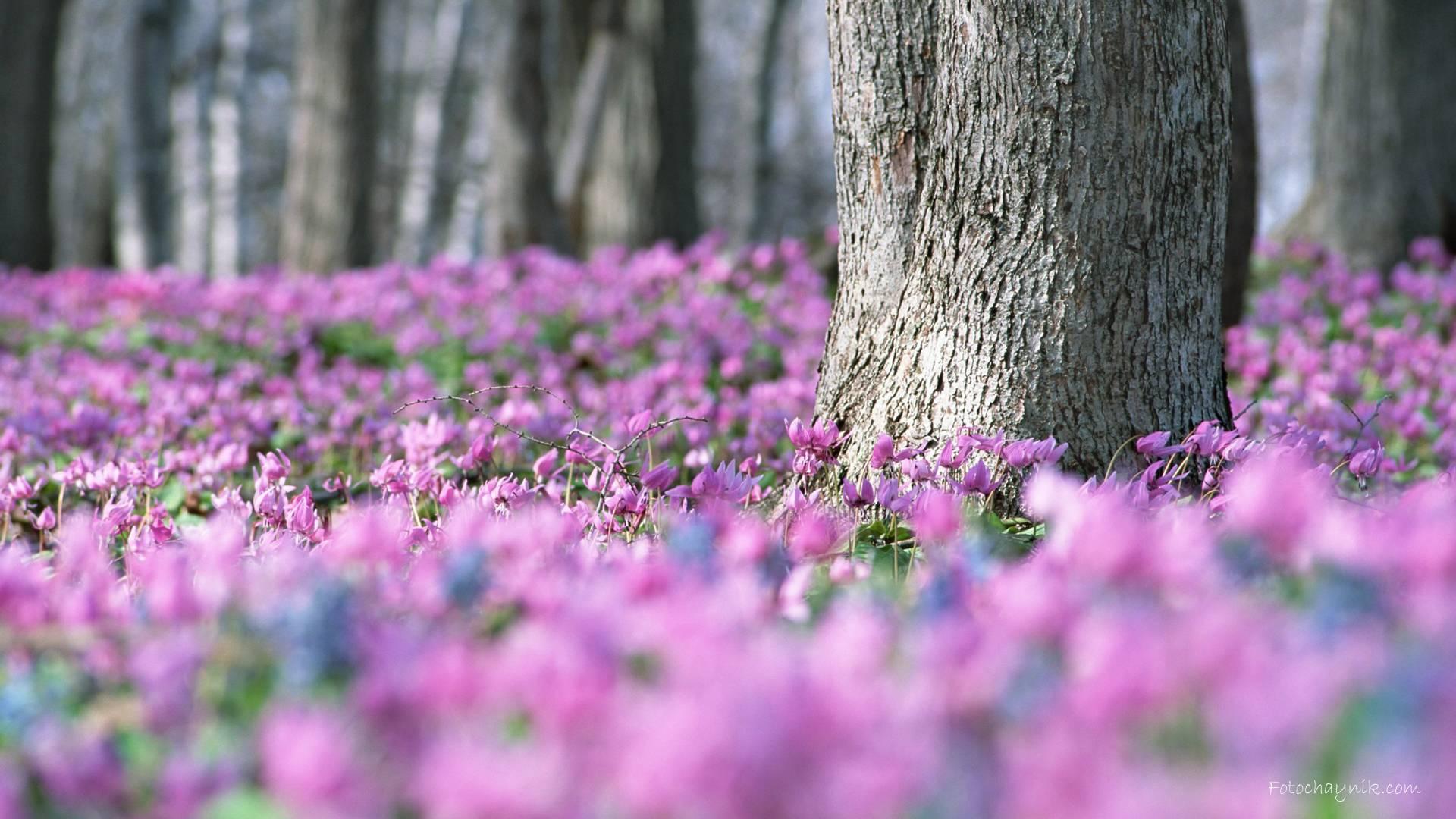 фото ранней весной