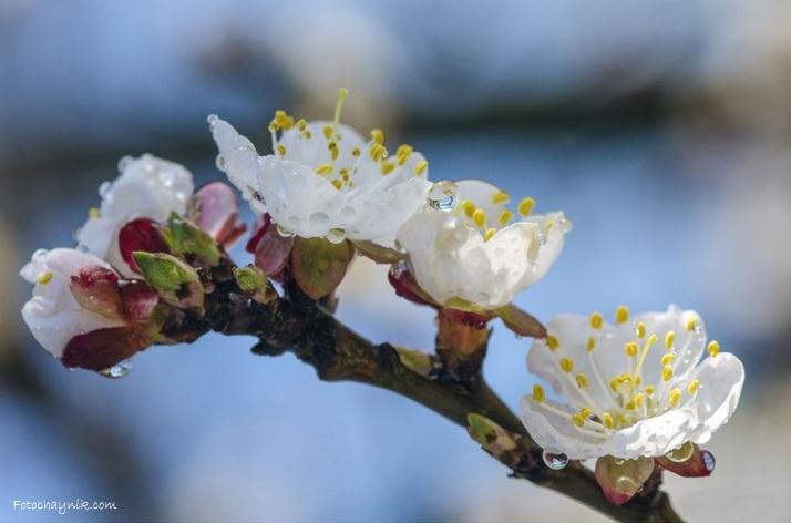 утро весна цветы