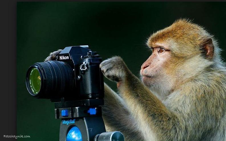 как научится фотографировать
