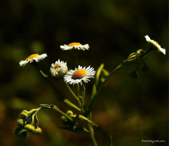 макро фото цветок