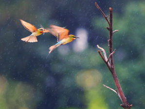 фотография дождя